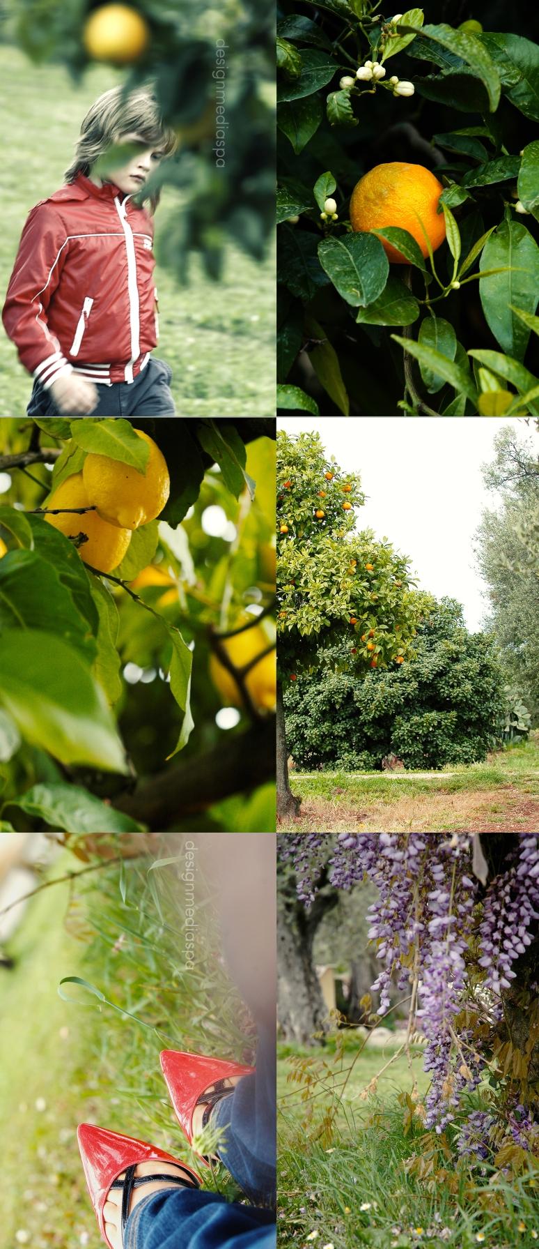Saturday afternoon in my garden (part ll)